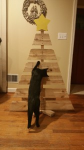 Our 2016 Christmas tree. Cat shown for size. (Not)